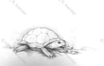 Turtle study (2015)