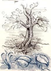L'Albero e le foglie (2018)
