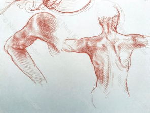 Dorso e braccio (2018)
